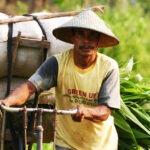 voyage découverte et liberté à Bali Le Bali authentique