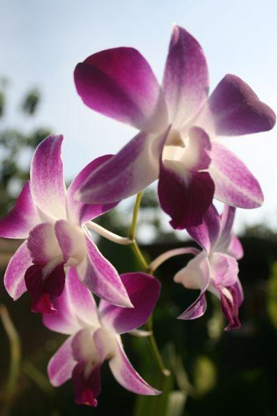 fleurs de Bali lune de miel à bali voyage romantique