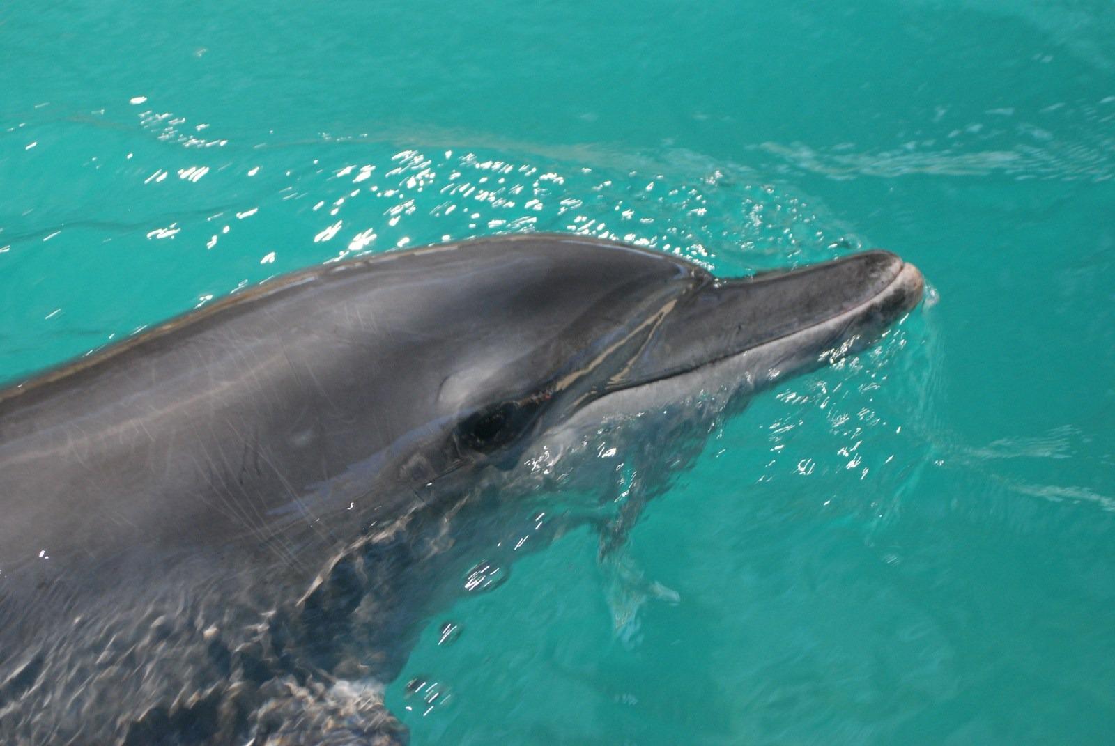 nager avec des dauphins bali
