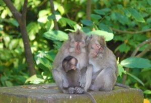 Voyage à Bali forêt des singes Ubud