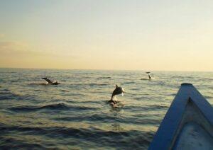 Découvrez des dauphins en mer avec Lune de Miel Bali