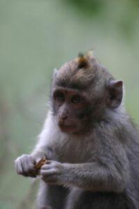Bali forêt des singes Ubud