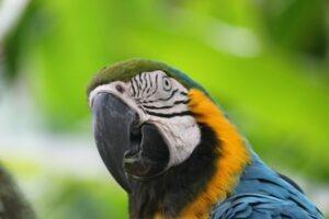 Bali parcs et animaux