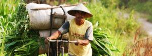 populations locales Bali