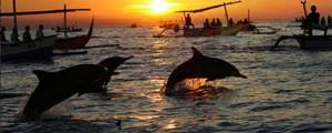 dauphins lovina Bali