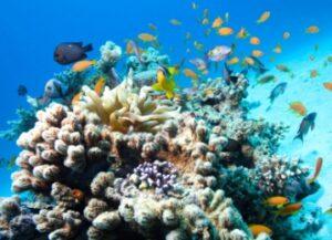 Snorkeling plongée à Menjangan Bali