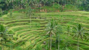 Découvrez les rizieres de tegallalang Ubud, bali avec Lune de Miel Bali