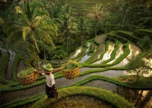 Rizières de Tegallalang avec Lune de Miel Bali