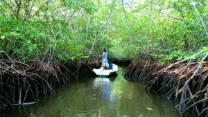 Mangroves à Nusa Lembongan avec lune de Miel bali