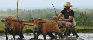 dajuma-tours-guest-farming