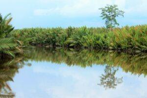Bornéo - Indonésie - Parc national de Tanjung Puting