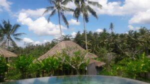 piscine avec vue sur la végétation tropicale