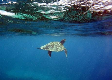 gili, tortue, Indonésie