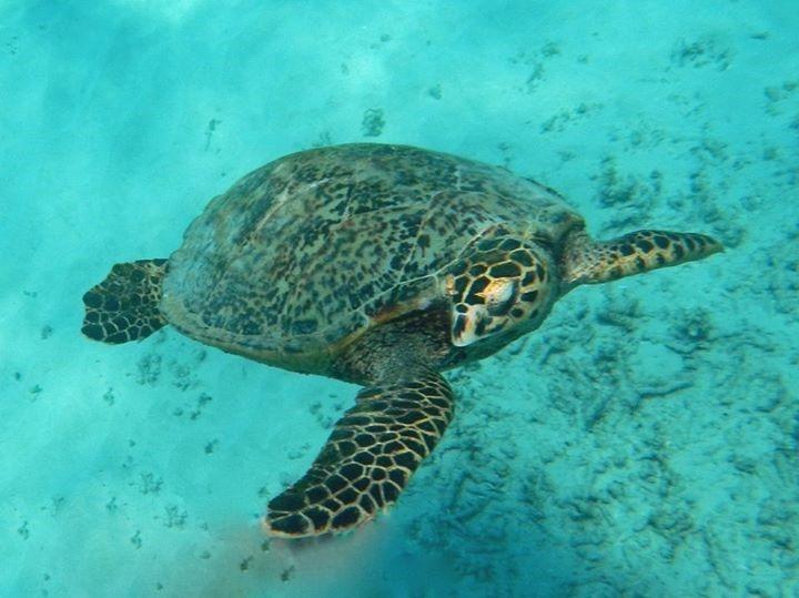 gili, snorkeling, Indonésie