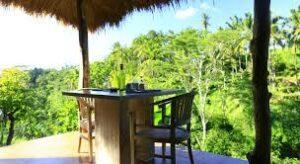 table avec sur sur la jungle