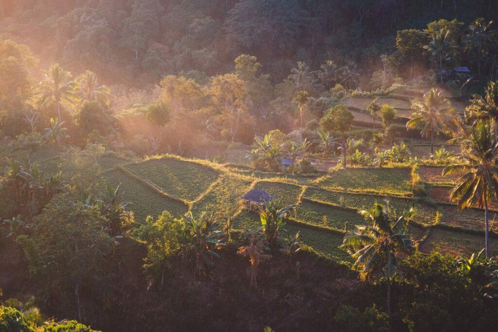 rizières, Lombok, Indonésie
