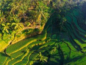 Rizières de Tegallalang, Bali, Indonésie