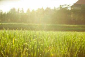 rizières ensoleillées à Bali